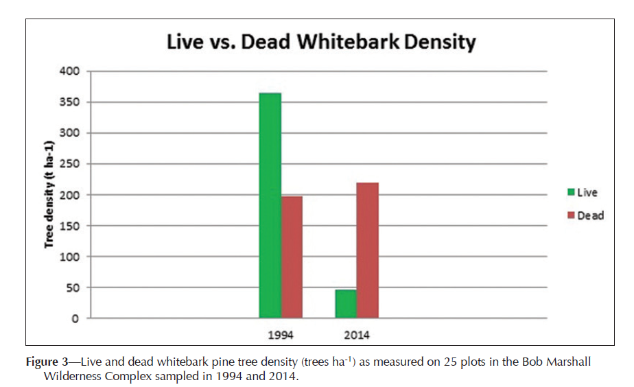Live vs. Dead Whitebark density