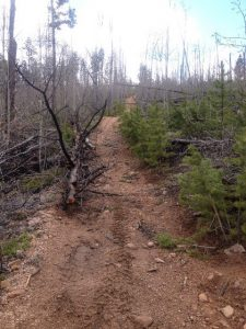 Fallen tree over trail