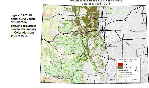 Mountain Pine Beetle map