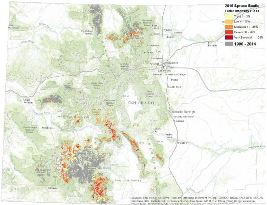 Spruce Beetle activity in Colorado 1996-2015