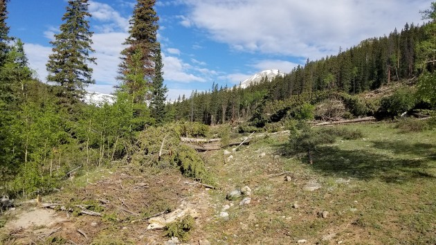 Forest area cleared - Restoration project on TinCup Pass on the Salida Ranger District of the Pike San Isabel NF performed by volunteers.