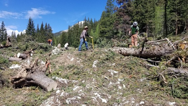 Volunteers working on clearing road in forest - Restoration project on TinCup Pass on the Salida Ranger District of the Pike San Isabel NF performed by volunteers.
